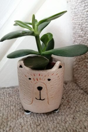 Lucky Jade Plant in mini bear pot