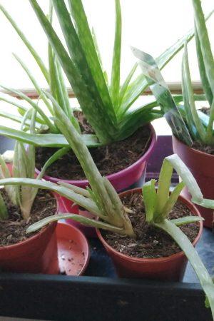 mini houseplant nursery
