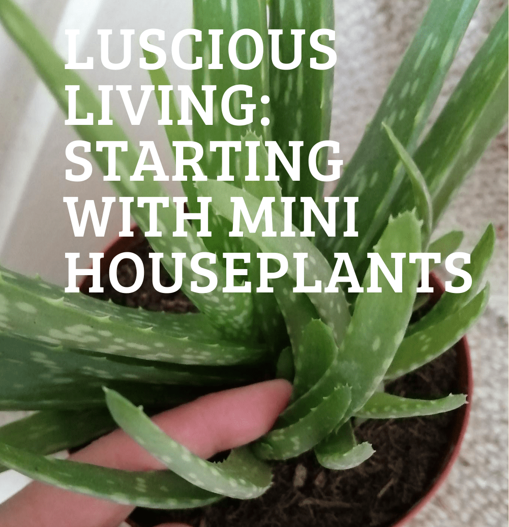 Luscious Living: Starting with Mini Houseplants