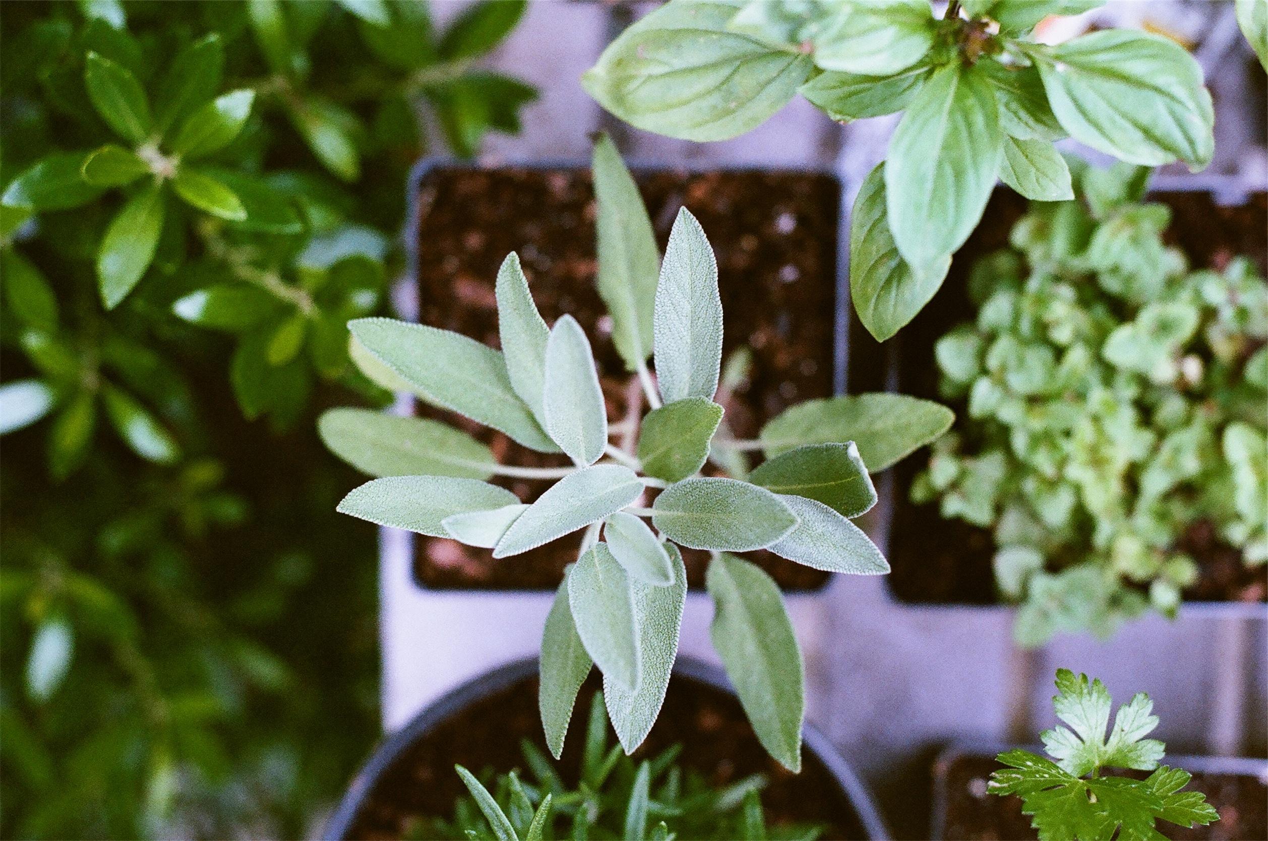 Luscious Living: Start a Mini Houseplant Nursery
