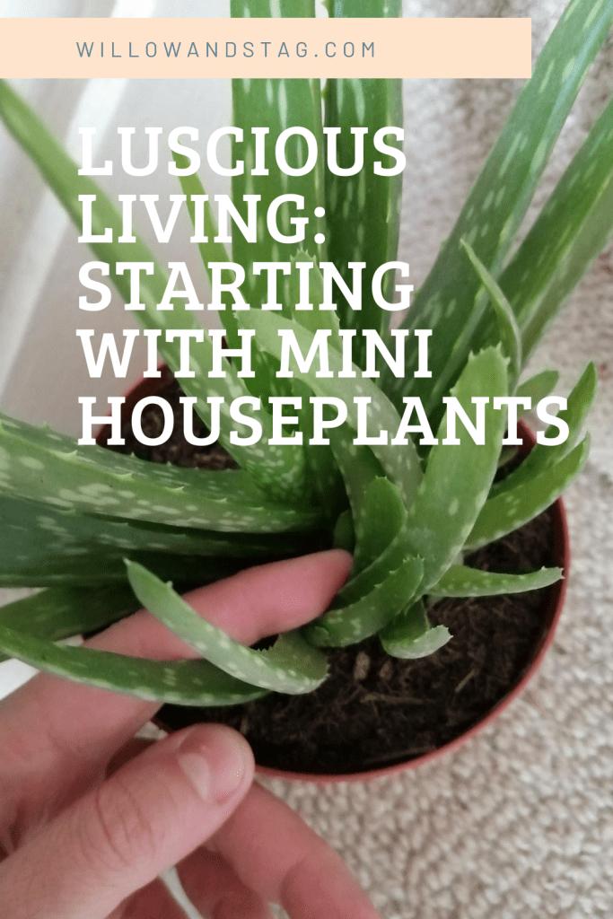 Pinterest graphic mini houseplant blog